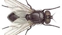 Samsun Ev-Daire-Yazlık Böcek İlaçlama